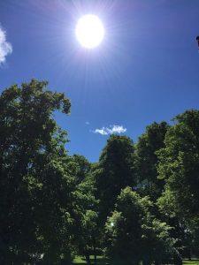 Grüne Bäume, klarer Himmel in Oslo. (Foto: Bomsdorf)
